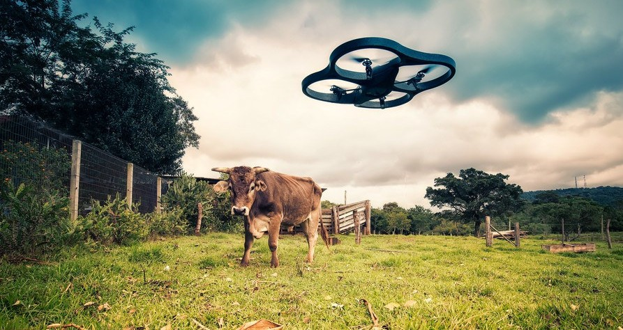 Drone v cow